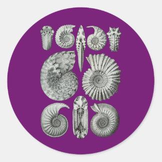 Ammonites Round Sticker
