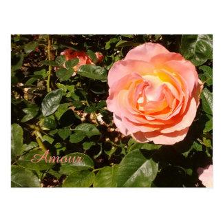 Amour Rose Postcard