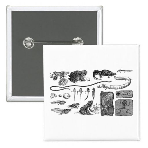 Amphibian Evolution 15 Cm Square Badge