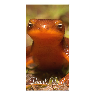 Amphibian Oregon Corvallis Reptile Customized Photo Card