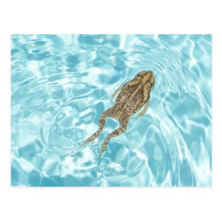 Amphibian Postcard 01