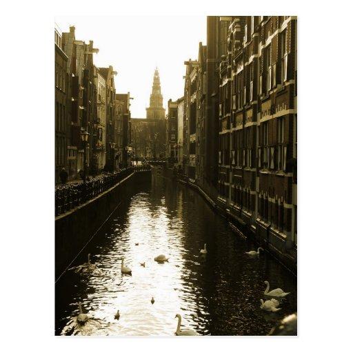 Amsterdam Canal Swans Photo Postcard