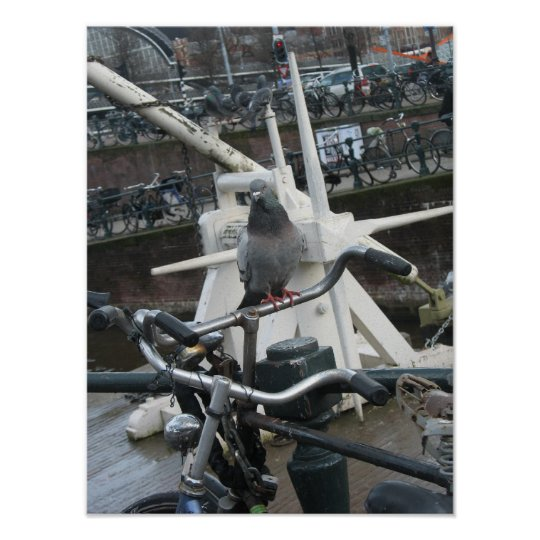 Amsterdam Pigeon on Bike Holland Photo Poster