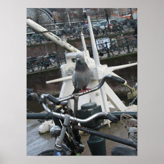 Amsterdam Pigeon on Bike Holland Photo Poster