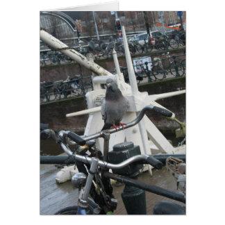 Amsterdam Pigeon(s) and Bike(s) Card