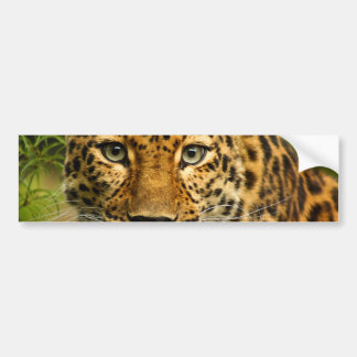Amur Leopard Car Bumper Sticker