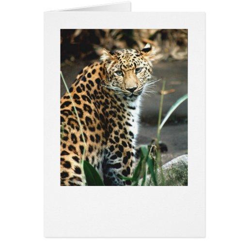 Amur Leopard Greeting Cards