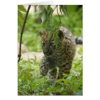 Amur Leopard Cub Card