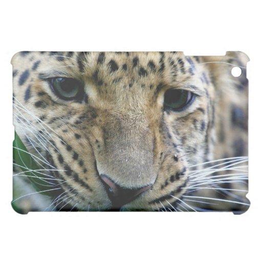 Amur Leopard  iPad Case
