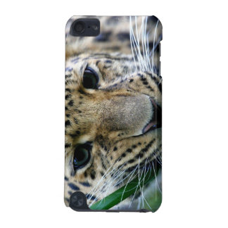 Amur Leopard iTouch Case iPod Touch 5G Cases