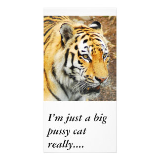 Amur Tiger, I'm just a big pussy cat really.... Photo Cards