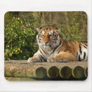 Amur Tiger Mouse Mat