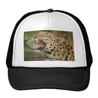 amure leopard cap