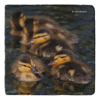 An Adorable Quintet of Mallard Ducklings Trivet
