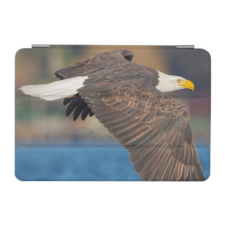 An adult Bald Eagle flies low over water iPad Mini Cover