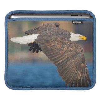 An adult Bald Eagle flies low over water iPad Sleeve