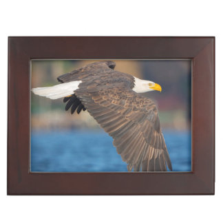 An adult Bald Eagle flies low over water Keepsake Box