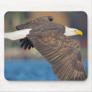 An adult Bald Eagle flies low over water Mouse Mat