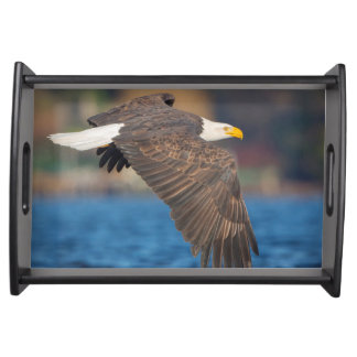 An adult Bald Eagle flies low over water Serving Tray