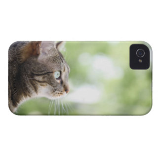An adult tabby cat staring out of a window iPhone 4 Case-Mate cases