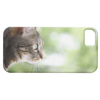 An adult tabby cat staring out of a window iPhone 5 cover