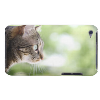 An adult tabby cat staring out of a window iPod touch covers