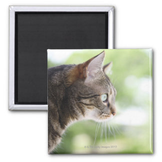 An adult tabby cat staring out of a window magnet