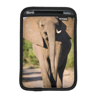 An African Elephant (Loxodonta Africana) Walks iPad Mini Sleeve