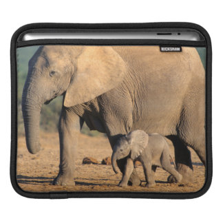 An African Elephant mother and calf on the move iPad Sleeve