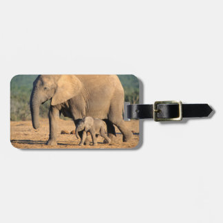 An African Elephant mother and calf on the move Luggage Tag