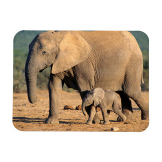An African Elephant mother and calf on the move Magnet