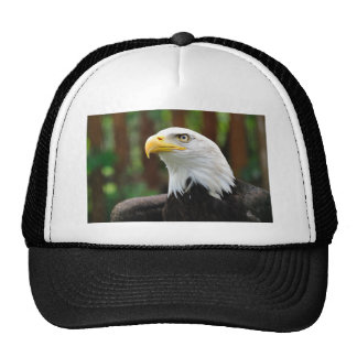 An American Patriot United States Bald Eagle Image Cap