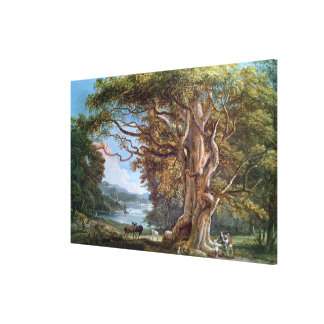 An Ancient Beech Tree, 1794 (oil on canvas) Canvas Print
