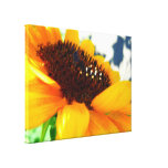 An Angled Sunflower Stretched Canvas Prints