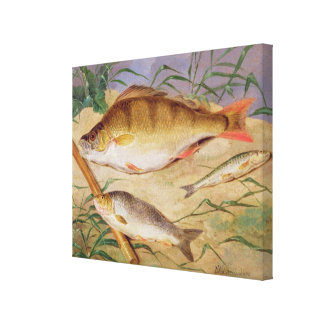 An Angler's Catch of Coarse Fish (oil on panel) Canvas Print