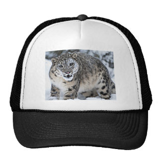 An Angry Snow Leopard Cap