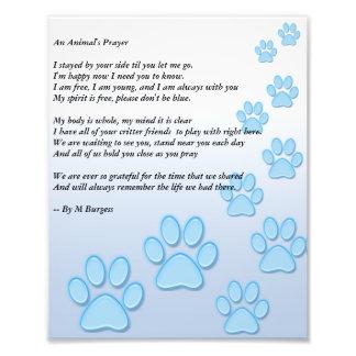 An Animal's Prayer - Art Photo