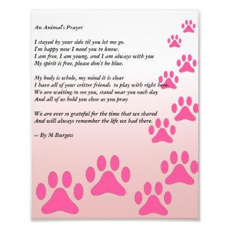 An Animal's Prayer - Photograph