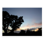 An April Sunset behind a Local Oak Tree Post Card