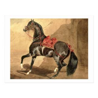 An Arabian Horse (w/c laid down on paper) Postcard