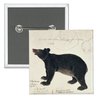 "An Asiatic Black Bear, ""Ursus Tibetanus"" 15 Cm Square Badge"
