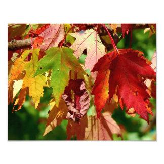An Autumn Rainbow Photo Print