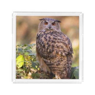An Eagle Owl Acrylic Tray