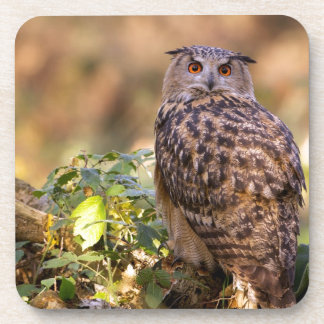 An Eagle Owl Drink Coaster