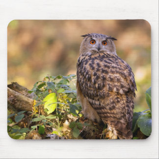 An Eagle Owl Mouse Mat