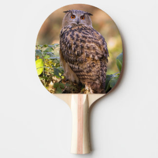 An Eagle Owl Ping Pong Paddle