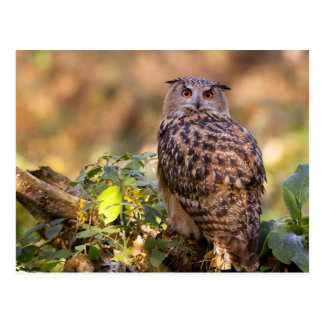 An Eagle Owl Postcard