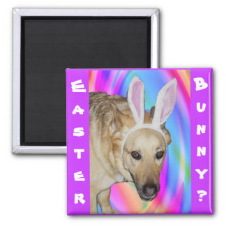 An Easter Bunny? Refrigerator Magnets