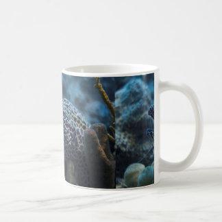 An Eel And A Shrimp Mugs