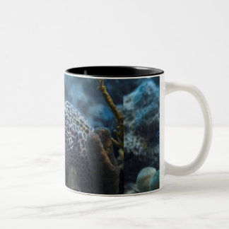 An Eel And A Shrimp Coffee Mug